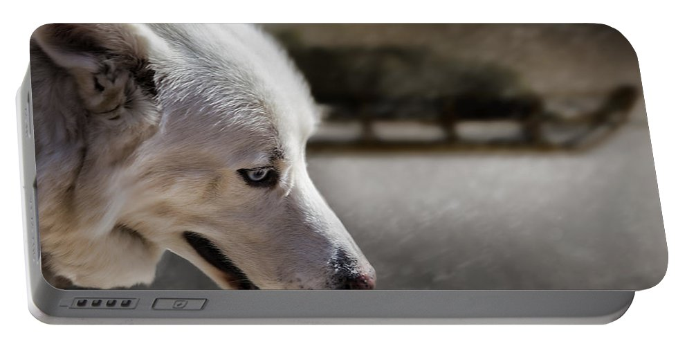 Sled Dog Portable Battery Charger featuring the photograph Sled Dog by Bob Orsillo