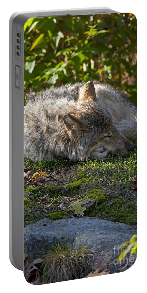 Timber Wolf Photography Portable Battery Charger featuring the photograph Sleeping Beauty by Wolves Only