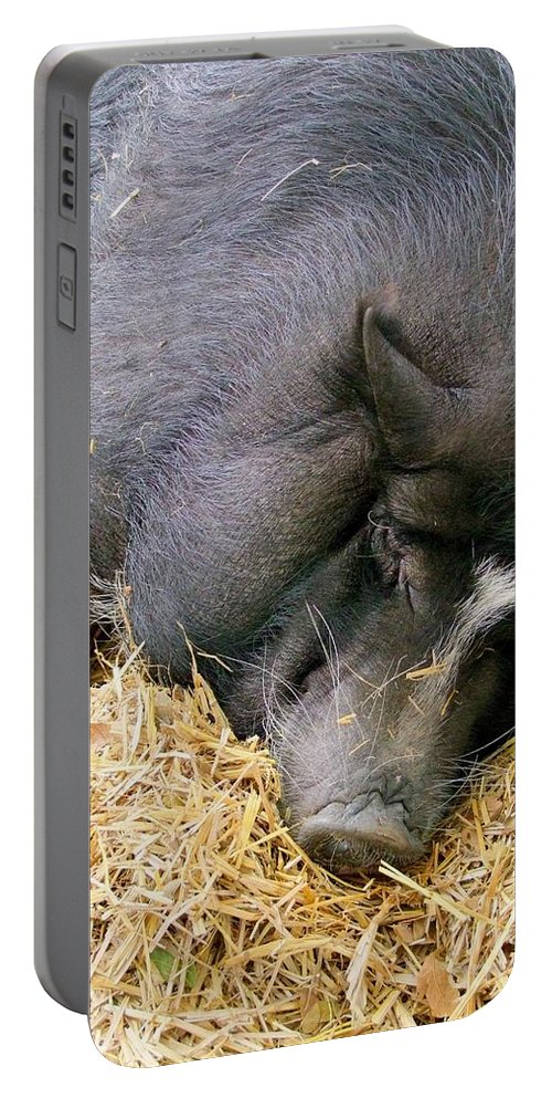 Pig Portable Battery Charger featuring the photograph Sleeping Sow by Mary Deal