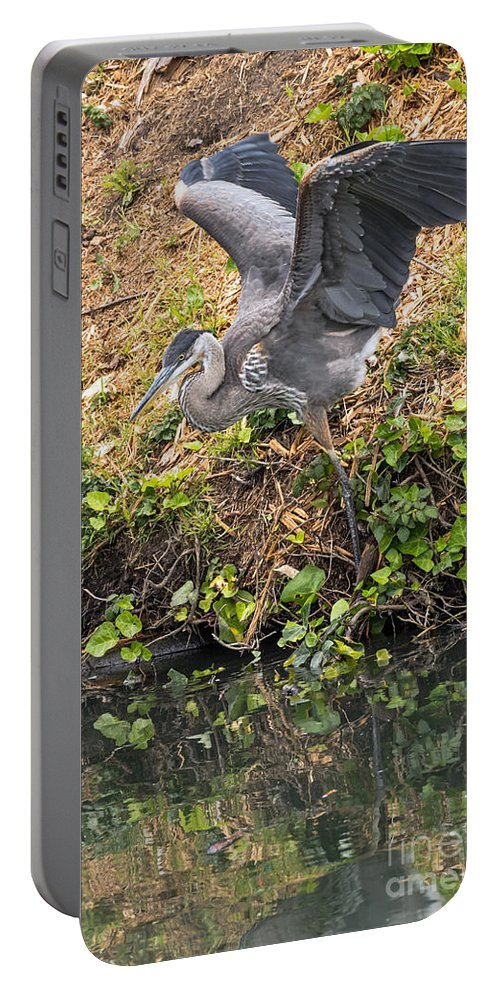 Bird Portable Battery Charger featuring the photograph Slip Sliding by Kate Brown