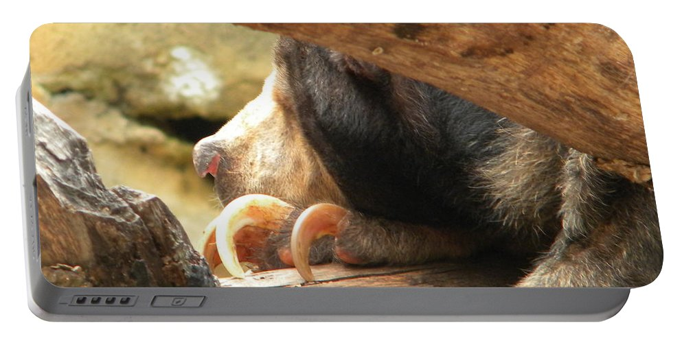 Sloth Portable Battery Charger featuring the photograph Sloth Bear by Nathanael Smith