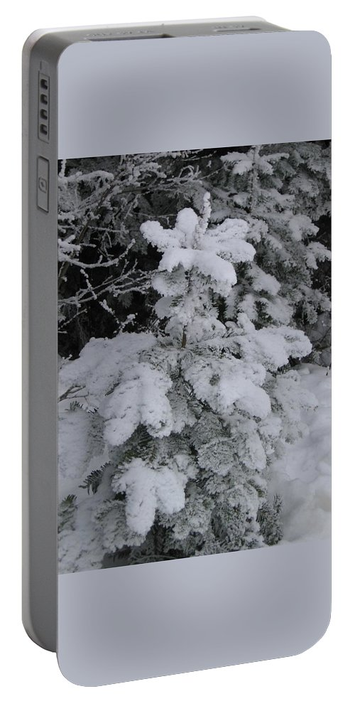 Snow Portable Battery Charger featuring the photograph Small Fir by Kimberly Maxwell Grantier