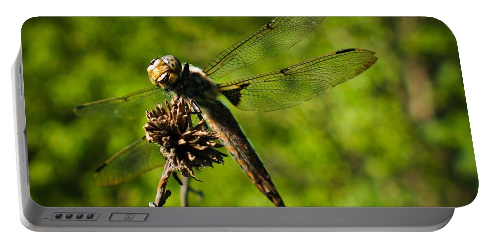 Portable Battery Charger featuring the photograph Smiling Dragonfly by Cheryl Baxter