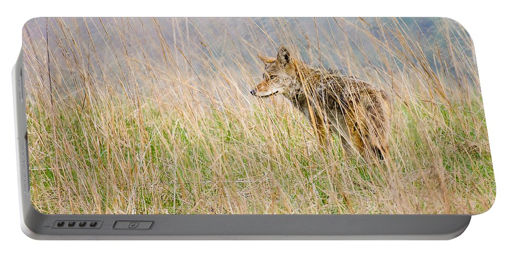 Coyote Portable Battery Charger featuring the photograph Smoky Mountains Coyote by Bill Swindaman