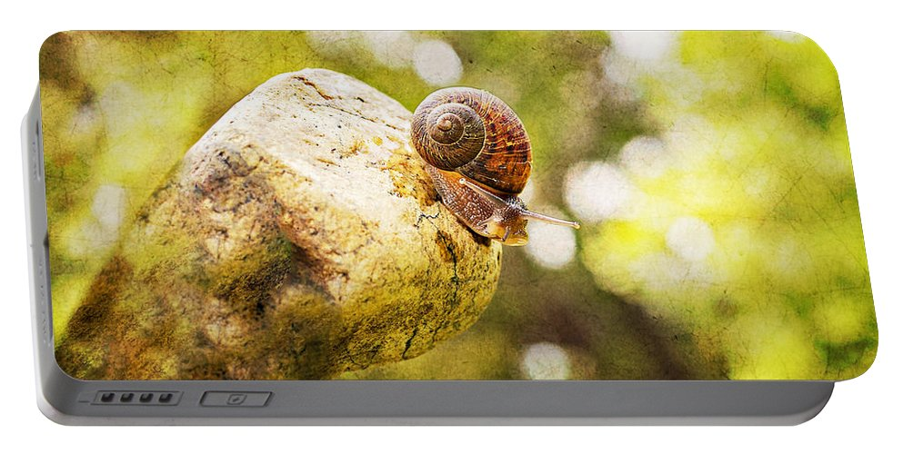 Snail Portable Battery Charger featuring the photograph Snail Of A Time by Angela Stanton