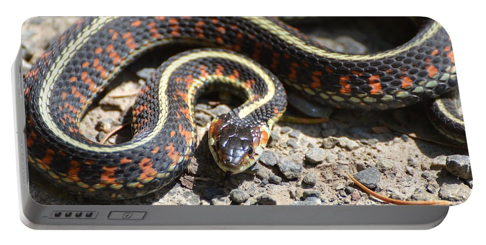 Snake Portable Battery Charger featuring the photograph Snake by Robin White