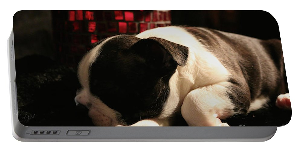 Animal Portable Battery Charger featuring the photograph Snoozer by Susan Herber