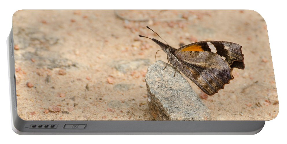Insect Portable Battery Charger featuring the photograph Snout Butterfly by Donna Brown