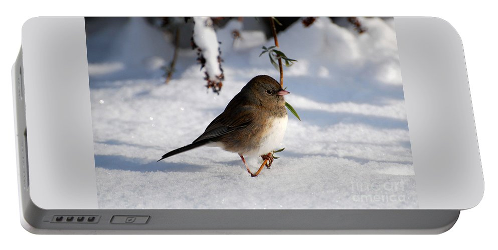 Snow Portable Battery Charger featuring the photograph Snow Bird by Todd Hostetter