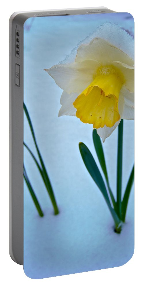 Snow-capped Daffodil On May 21 Portable Battery Charger featuring the photograph Snow-capped Daffodil On May 21 Near Des Chutes National Forest-or by Ruth Hager