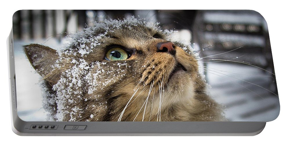 Cat Portable Battery Charger featuring the photograph Snow Cat by Shane Holsclaw
