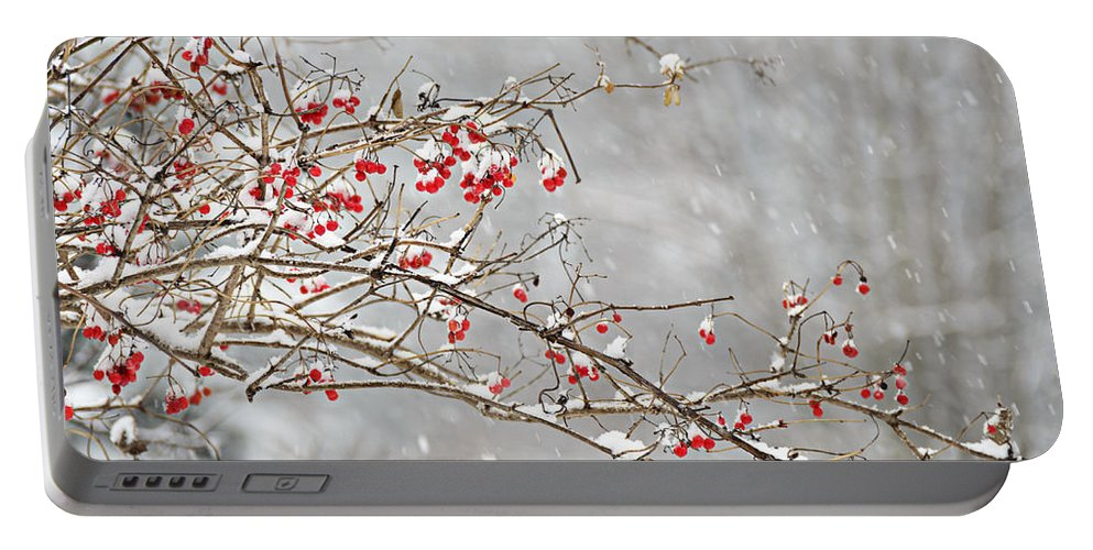 Trees Portable Battery Charger featuring the photograph Snow Covered Winter Berries by LeeAnn McLaneGoetz McLaneGoetzStudioLLCcom