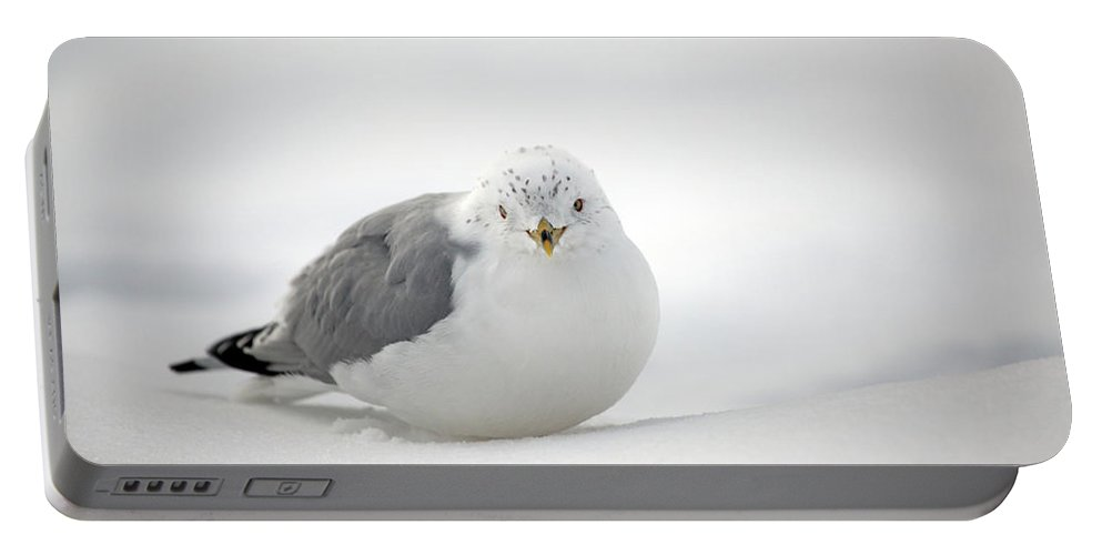Winter Portable Battery Charger featuring the photograph Snow Gull by Karol Livote