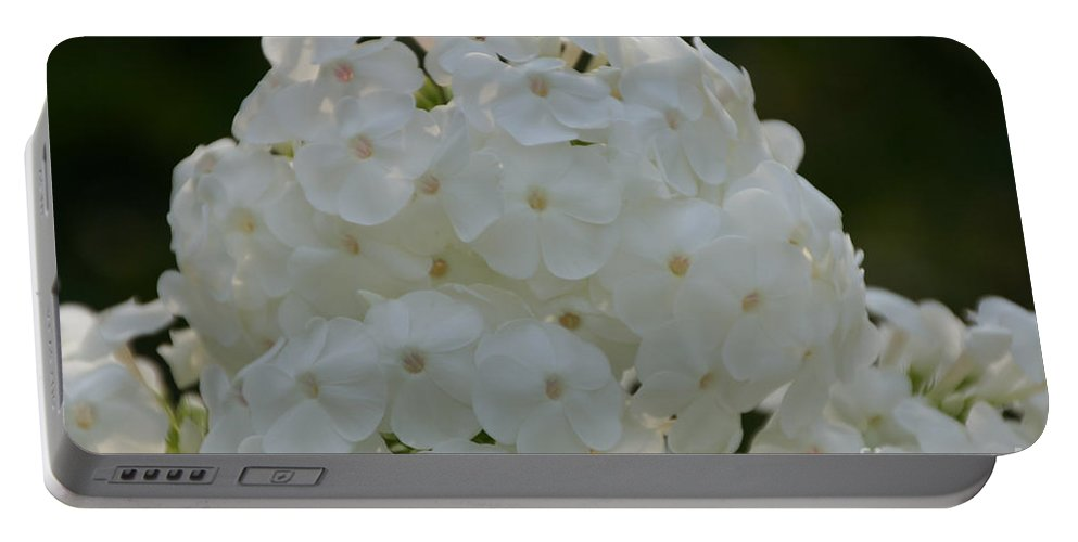 Flower Portable Battery Charger featuring the photograph Snow Phlox by Susan Herber