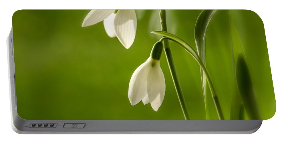Background Portable Battery Charger featuring the photograph Snowdrop by TouTouke A Y