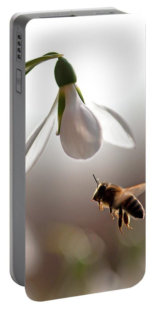 Snowdrops And The Bee Portable Battery Charger featuring the photograph Snowdrops And The Bee by Torbjorn Swenelius