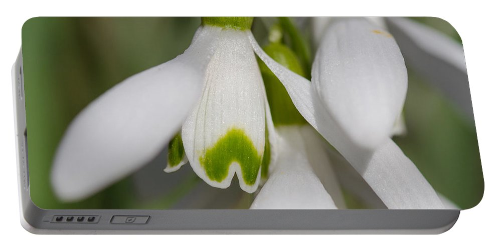 Snowdrops Portable Battery Charger featuring the photograph Snowdrops by Andreas Levi