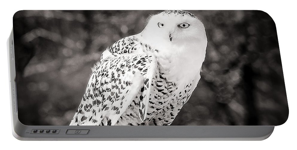 Snowy Owl Portable Battery Charger featuring the photograph Snowy Owl Cold Stare Black And White by LeeAnn McLaneGoetz McLaneGoetzStudioLLCcom