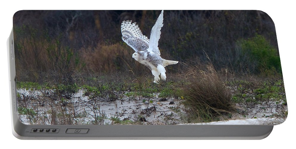 Snowy Owl Portable Battery Charger featuring the photograph Snowy Owl In Florida 10 by David Beebe