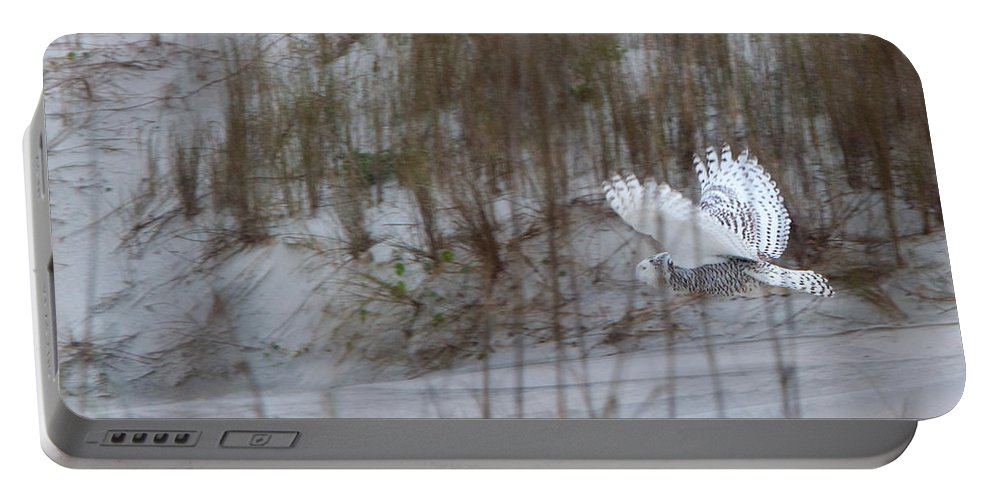 Snowy Owl Portable Battery Charger featuring the photograph Snowy Owl In Florida 12 by David Beebe