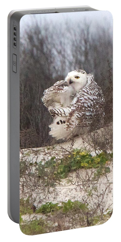 Snowy Owl Portable Battery Charger featuring the photograph Snowy Owl In Florida 4 by David and Patricia Beebe