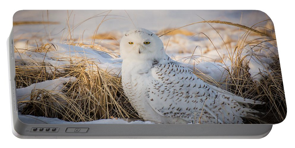 Landscape Portable Battery Charger featuring the photograph Snowy Owl by Jose Cruz