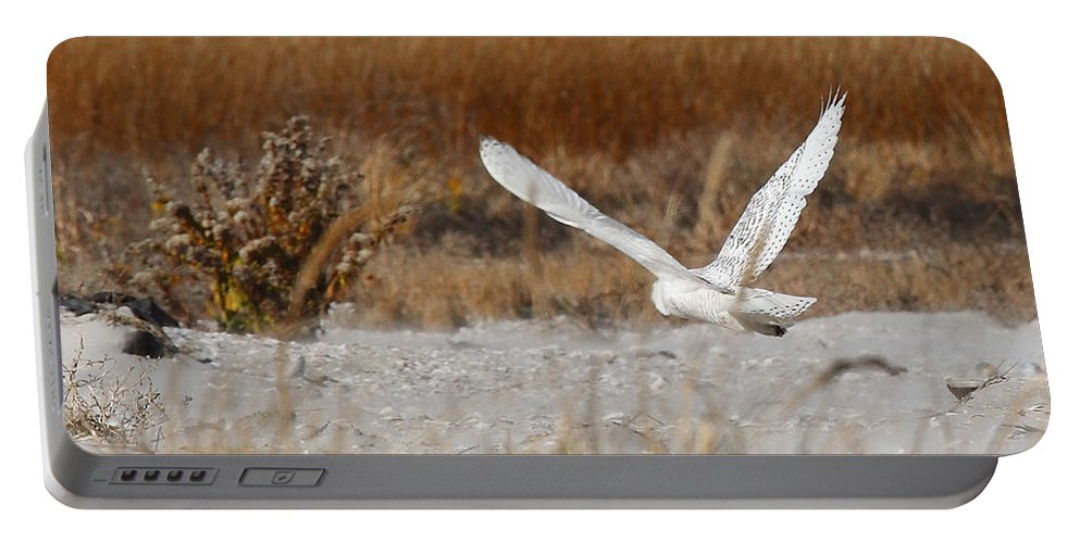 snowy Owl Portable Battery Charger featuring the photograph Snowy Owl On The Hunt by Traci Law