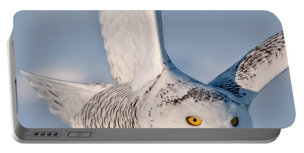 Snowy Owl Portable Battery Charger featuring the photograph Snowy Owl Pictures 47 by World Wildlife Photography