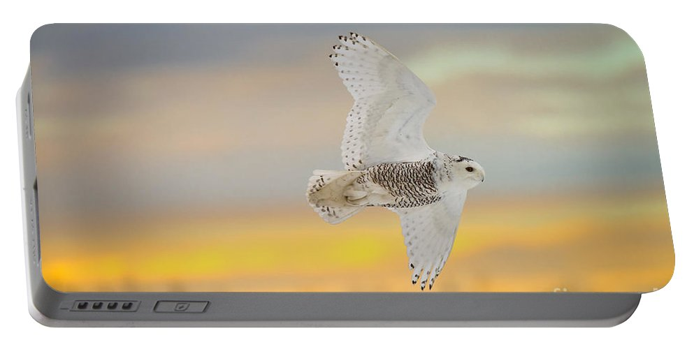 Snowy Owl Portable Battery Charger featuring the photograph Snowy Owl Pictures 71 by World Wildlife Photography