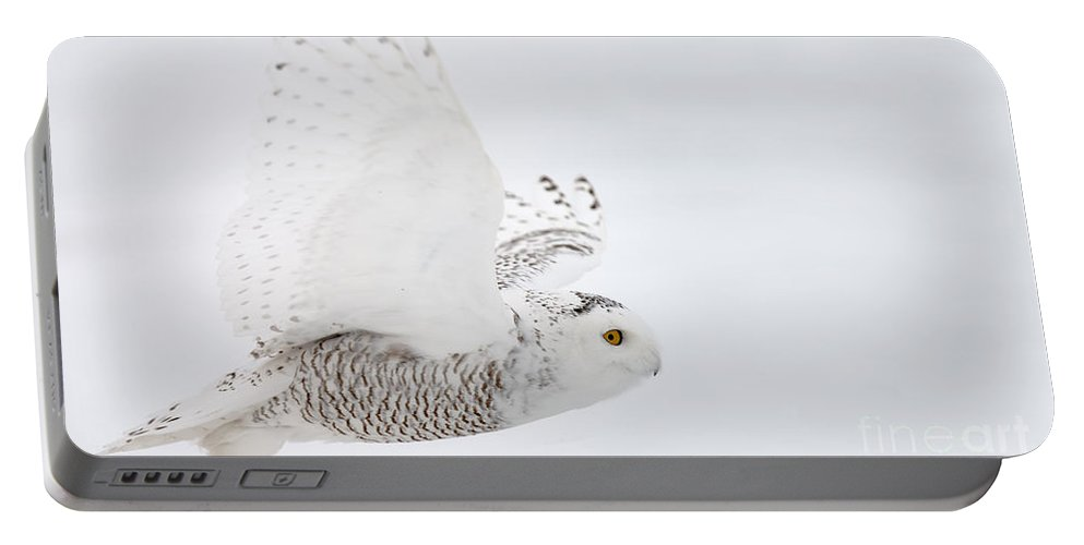 Snowy Owl Portable Battery Charger featuring the photograph Snowy Owl Pictures 77 by World Wildlife Photography