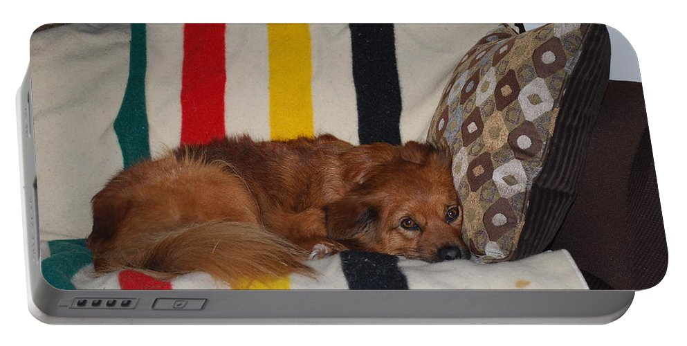 Lady Likes Her Pillow Portable Battery Charger featuring the photograph Snuggle Time by Robert Floyd