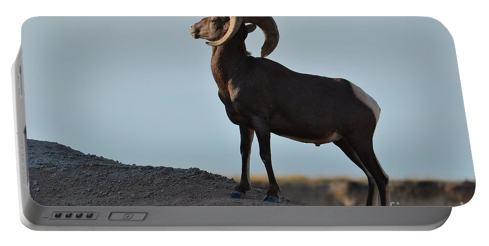 Bighorn Portable Battery Charger featuring the photograph Soaking Up The Sun by Deanna Cagle