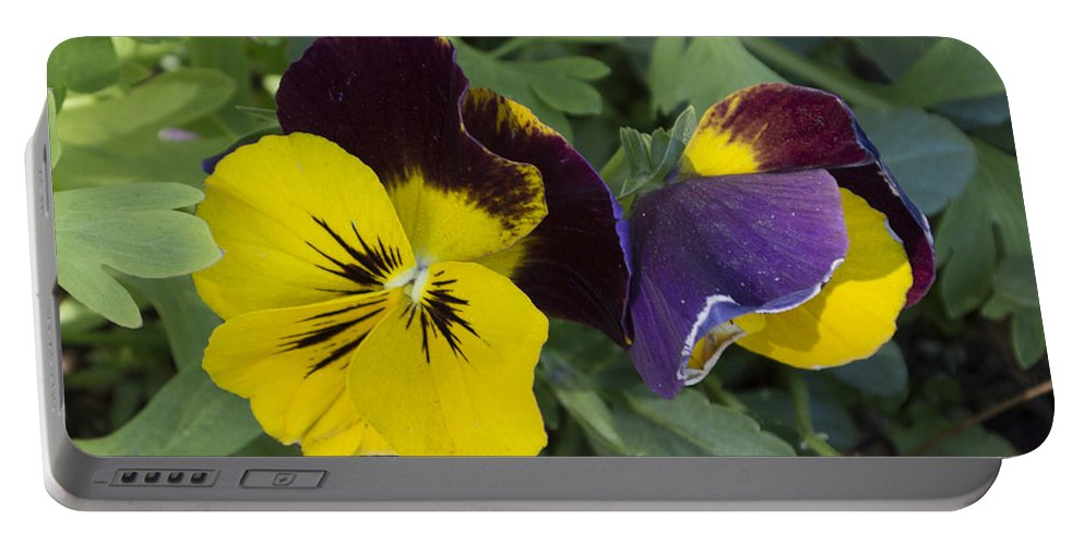 Solvang Pansies Portable Battery Charger featuring the digital art Solvang Pansies by Barbara Snyder