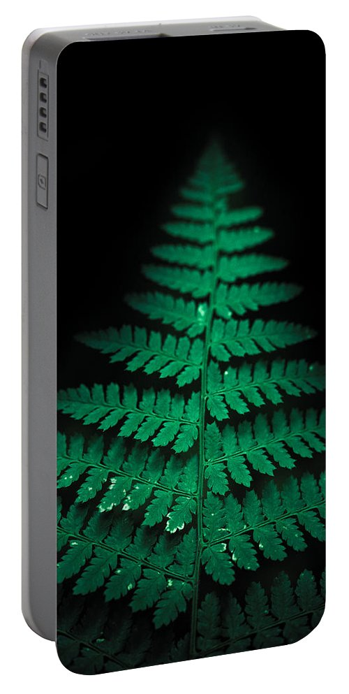 Fern Portable Battery Charger featuring the photograph Soothing Fern by Shane Holsclaw