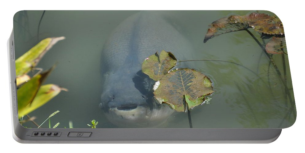 South American Pacu Portable Battery Charger featuring the photograph #south American Pacu by Cornelia DeDona