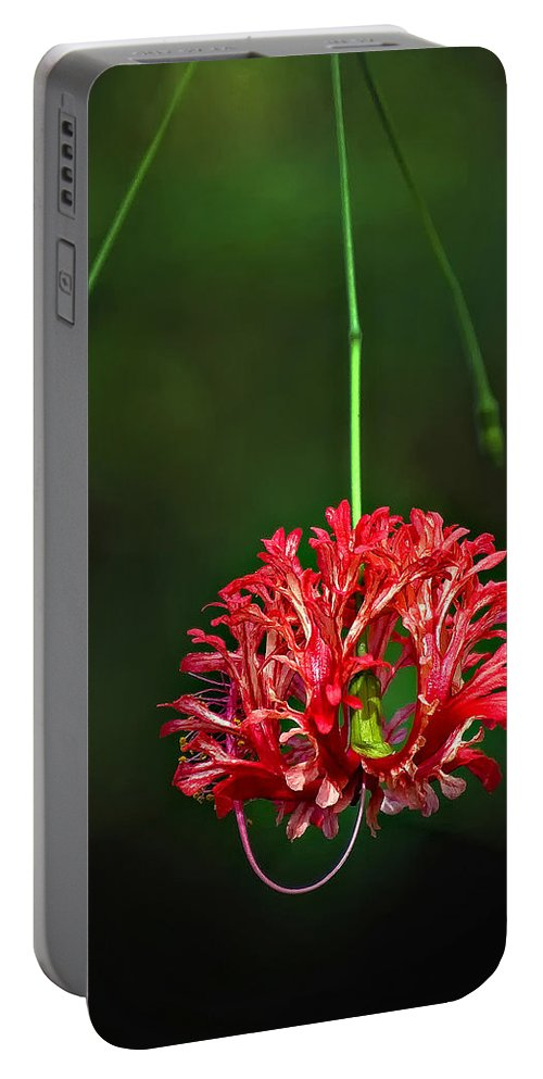 Flower Portable Battery Charger featuring the photograph Southern Belle by Steve Harrington