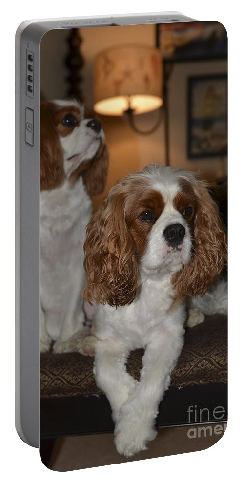 Rivers Portable Battery Charger featuring the photograph Spaniels by Dale Powell
