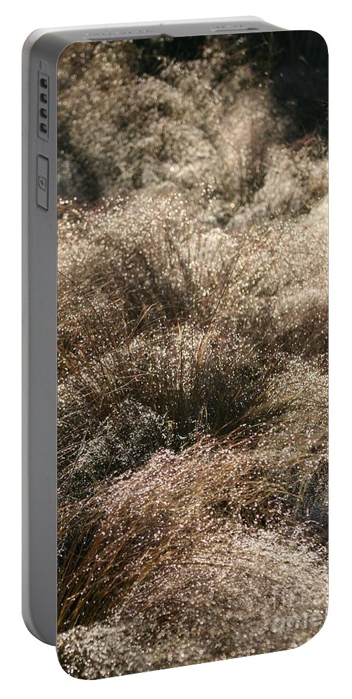 Grasses Portable Battery Charger featuring the photograph Sparkling Grasses by Nadine Rippelmeyer
