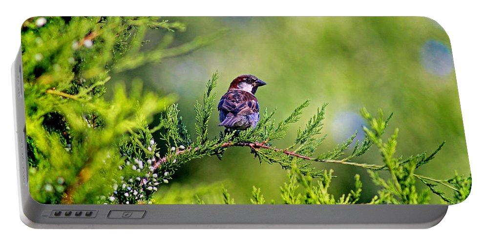 Bird Portable Battery Charger featuring the photograph Sparrow by Karen Adams