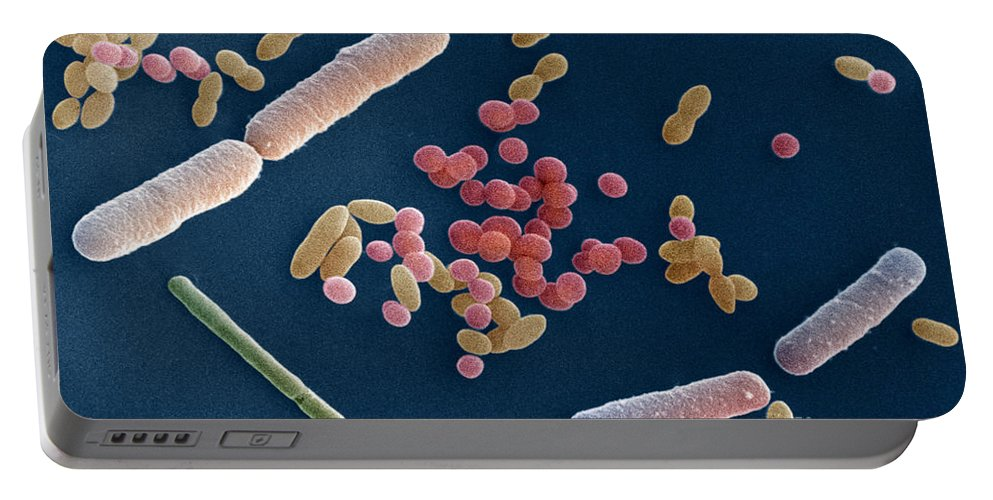 Sem Portable Battery Charger featuring the photograph Species Of Bacteria by David M. Phillips