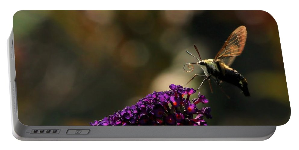 Sphinx Portable Battery Charger featuring the photograph Sphinx Moth On Butterfly Bush by Kenny Glotfelty