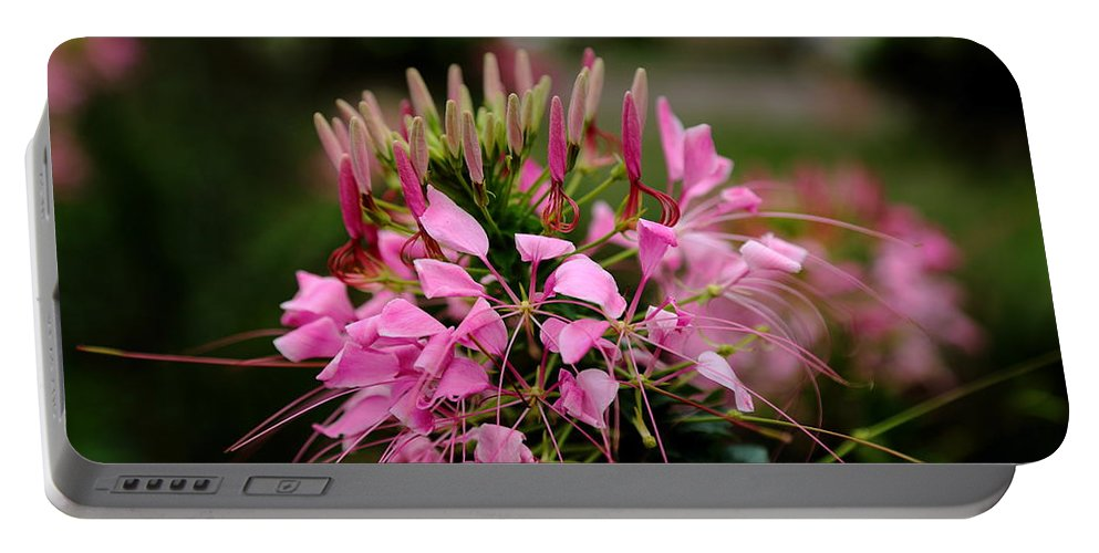 Spider Flower Portable Battery Charger featuring the photograph Spider Flower by Scott Hill
