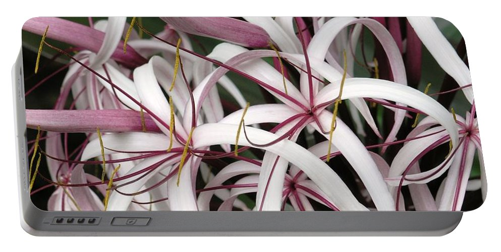 Lily Portable Battery Charger featuring the photograph Spider Lily by Mary Deal