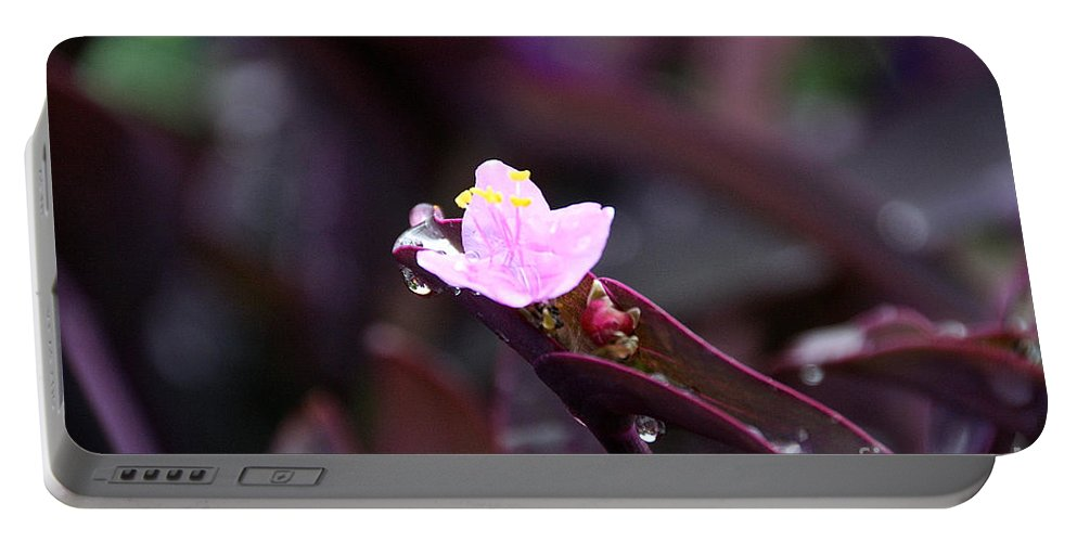 Flower Portable Battery Charger featuring the photograph Spiderwort Dew by Susan Herber