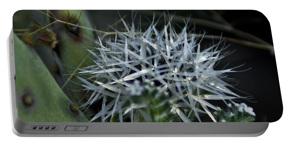 Flower Portable Battery Charger featuring the photograph Spiney Bloom by Patrick Moore