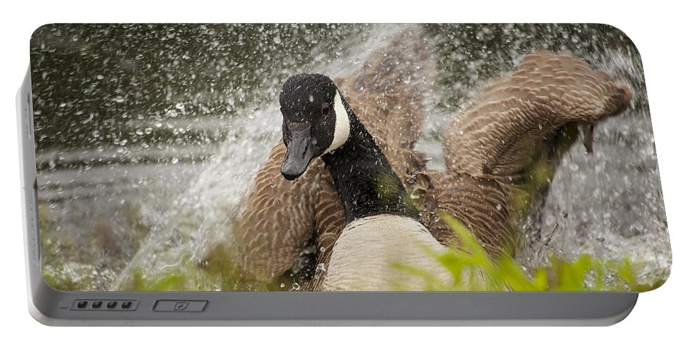 Canada Goose Portable Battery Charger featuring the photograph Splishing And Splashing by Karol Livote