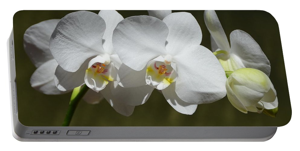 Orchid Portable Battery Charger featuring the photograph Spray Of Beautiful White Orchids by Carla Parris