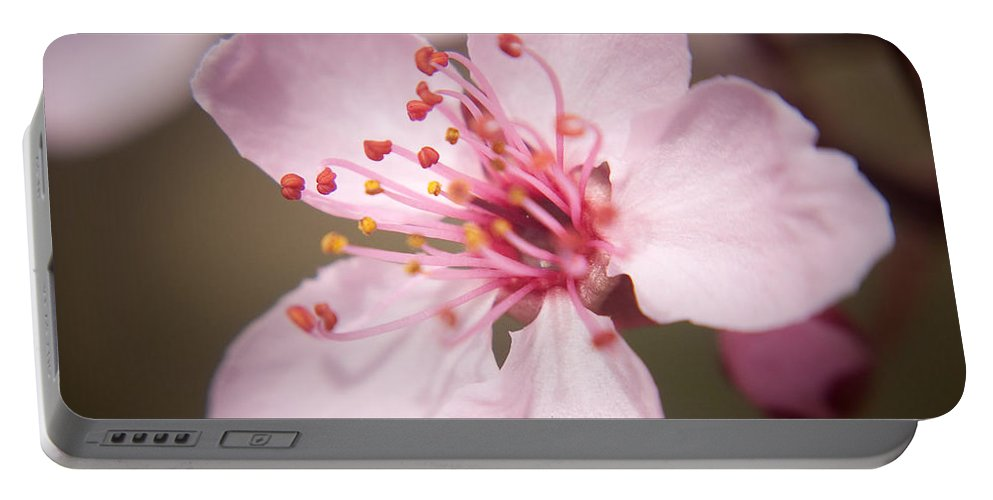 Flowers Portable Battery Charger featuring the photograph Spring Blooms 6697 by Timothy Bischoff