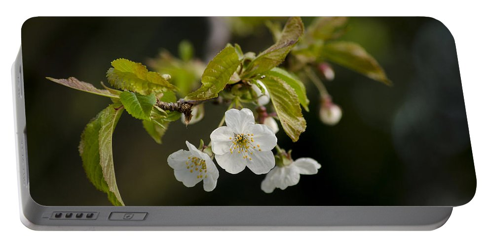 Branch Portable Battery Charger featuring the photograph Spring Blossom by Spikey Mouse Photography