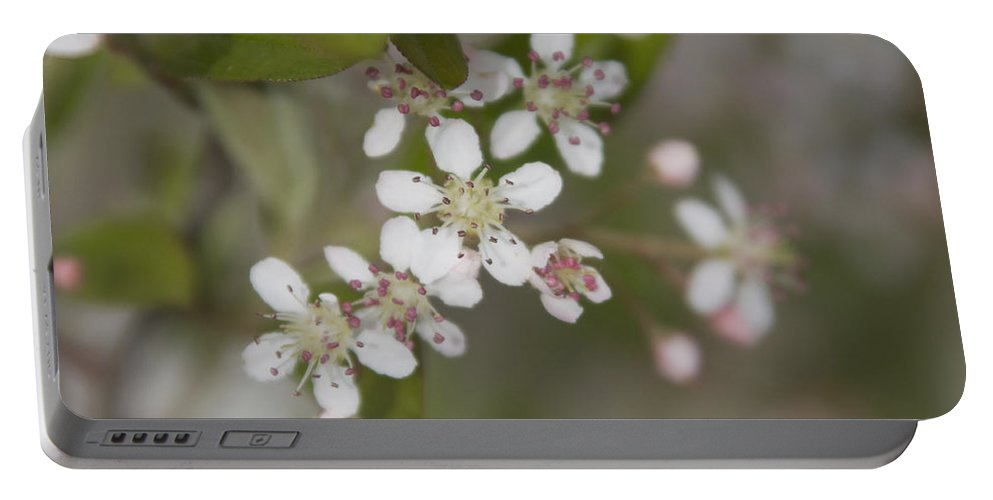 Spring Portable Battery Charger featuring the photograph Spring Blossoms by Jayne Gohr